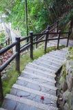 Long escalier à la terre dans la forêt Photo stock