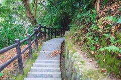 Long escalier à la terre dans la forêt Image stock