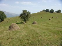 Long expanse of green lawns with some bals of hay in the Armenian country. Hilly landscape with mountains in distance. Green field of grass. Shed trees. Blue stock images