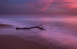 Long exposure of driftwood in beautiful sunset. Long exposure of driftwood in beautiful sunset in South Corfu Greece Ionian Islands Royalty Free Stock Images