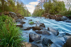 Long exposure from a floating, idyllic river with stones and grass in the foreground. Royalty Free Stock Image
