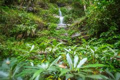 The long exposure image of a beautiful waterfall Royalty Free Stock Images