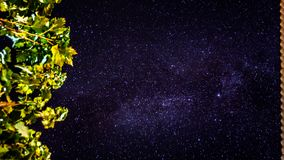 The night sky. A long exposure image capturing the night sky and the leafs of a tree at summer Stock Images