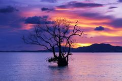 Long exposure image of dramatic sunset or sunrise,sky clouds over mountain with alone tree in tropical sea.  stock photo
