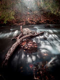 Long Exposure Log in Stream Royalty Free Stock Photography