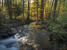 Long exposure magic forest stream in autumn with moss fern fallen leaves and trees in orange golden light in luzicke hory mountain royalty free stock photos