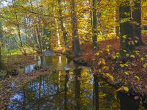 Long Exposure Magic Forest Stream Creek In Autumn With Stones Mo Royalty Free Stock Image
