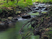 Long exposure magic forest stream with stones, trees and roots Stock Images