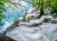 Showing the force of water rushing over the top of a waterfall and the trees and plants that survive in the water and current. royalty free stock photo