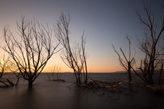 Long exposure photo of a lake at dusk, with trees and branches c Royalty Free Stock Photos