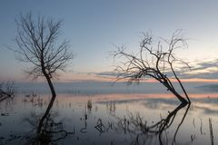 Long exposure photo of a lake at dusk, with trees and branches c Royalty Free Stock Images