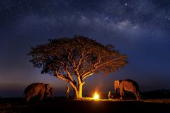Long exposure Photograph with grain. The mahout is creating a fire with elephant under the tree. The Milky Way in the sky. Galaxy. Star Study and Milky Way royalty free stock photography
