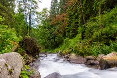 Long exposure on river flowing through beautiful raw green forest. stock image