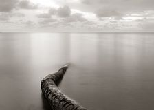 Long exposure seascape with fallen palm tree Royalty Free Stock Images