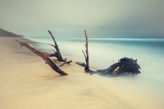 Long exposure of tree and sea with  vintage autumn colors Stock Photos