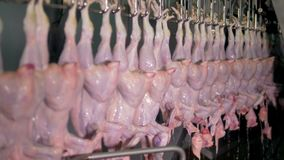 A long factory line with freshly washed down chicken bodies at meet processing plant. 4K. stock video footage