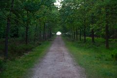 Long forest road leads you to the unknown Royalty Free Stock Photography