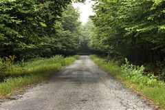 Long Forest Road Stock Image