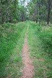 Long Forest Trail Green Grass Royalty Free Stock Photography