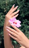 Long French nails with white manicure on a woman`s hand. With pink accessory on a nature background royalty free stock photography