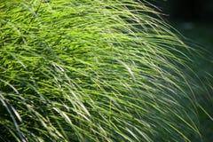 Long fresh green grass Stock Photo