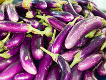 Long fresh organic raw purple brinjal or eggplant or aubergine in market. Healthy and delicious purple eggplants background. (Selective focus Stock Photo