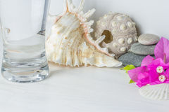 Long glass of water on white wooden desktop. With spa stones , seashell and bougainvillaea Stock Images
