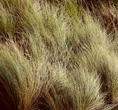 Long grass Royalty Free Stock Photos
