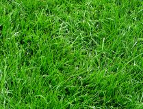 Long grass Stock Photos