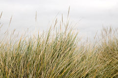 Long grass Stock Image