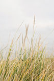 Long grass Royalty Free Stock Images
