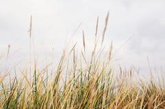 Long grass royalty free stock photos