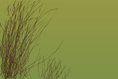 Long Grass Stock Photography
