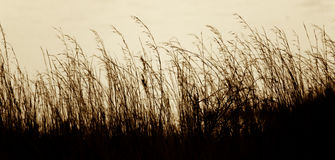 Long grass against water royalty free stock photos