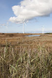 Long grass and bogland with wind turbines Royalty Free Stock Photos