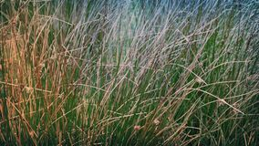 Long Grass In Breeze stock footage