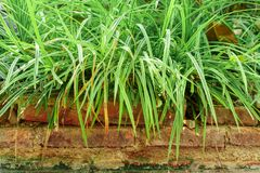 Long grass on the bricks stock images