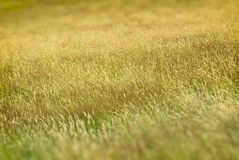 Long Grass royalty free stock photography