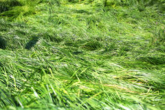 Long grass Stock Images