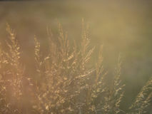 Long grass and flares from sunlight Royalty Free Stock Photo