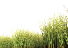Long Grass. Isolated on the white background. 3D render Royalty Free Stock Image