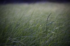 Long grass in a marsh field, with space for text stock photos