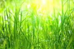 Long grass meadow Stock Image