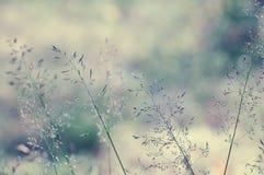 Long grass meadow Stock Photos