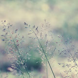 Long grass meadow. Close up. Nature in details Royalty Free Stock Photography