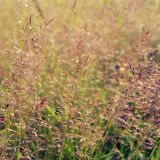 Long grass meadow Royalty Free Stock Photography