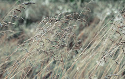 Long grass meadow Royalty Free Stock Images