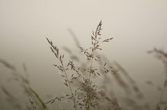 Long grass during sunrise Stock Photography