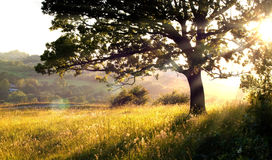 Long grass and tree in morning light Royalty Free Stock Photos