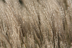 Long grass in the wind Royalty Free Stock Images